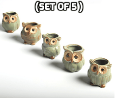 Cute Owl Shape Plant Flower Pot ( Set of 5 )