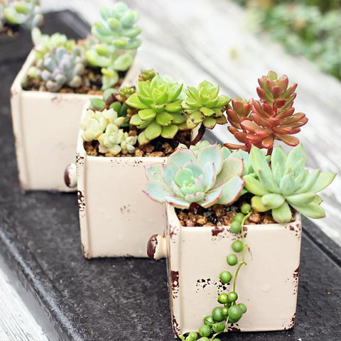 Set of 3 European Vintage Succulent Planter Pots