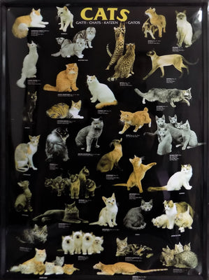 plaque métal vintage CATS - TOFMOBILE