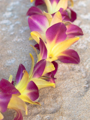 Dyed Yellow Orchid Single Lei - locallei