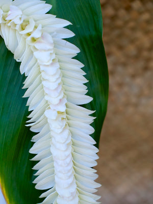 White Indiana Lei - locallei