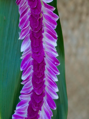 Purple Indiana Lei - locallei