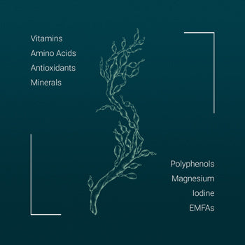 """<img alt=""""<img alt=""""A seaweed illustration to showcase the many properties of seaweed extract like vitamins, amino acids, minerals, antioxidants, polyphenols, magnesium, iodine and EMFAs - each of which adds to the multitude of seaweed benefits"""" src=""""//cdn.shopify.com/s/files/1/2399/4509/files/NEUU-seaweed-benefits-illustration-sm.jpg?v=1522331586"""" style=""""float: none;"""" />"""" src=""""//cdn.shopify.com/s/files/1/2399/4509/files/NEUU-seaweed-benefits-illustration-sm.jpg?v=1522331586"""" style=""""float: right;"""" />"""
