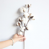 Farmhouse Natural Cotton Branches (10pcs) | Farmhouse Decor