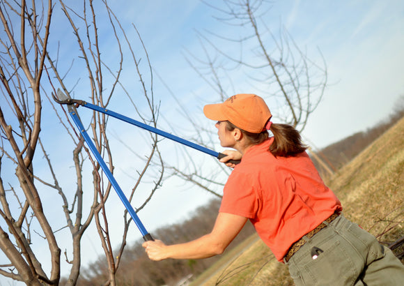 Pruning Intensive Workshop
