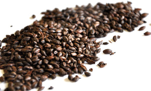 Black (Patent) malt (470-600L)