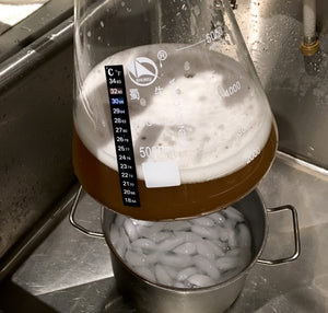 Dilute and chill the starter wort