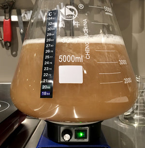 Pitch yeast and ferment until complete (start of fermentation)