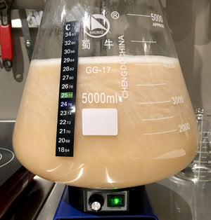 Pitch yeast and ferment until complete (end of fermentation)