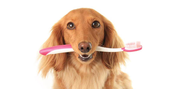 Teeth Cleaning Clinic