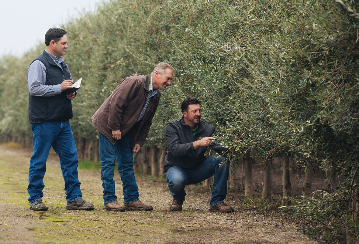 february 2020 notes from the olive grove