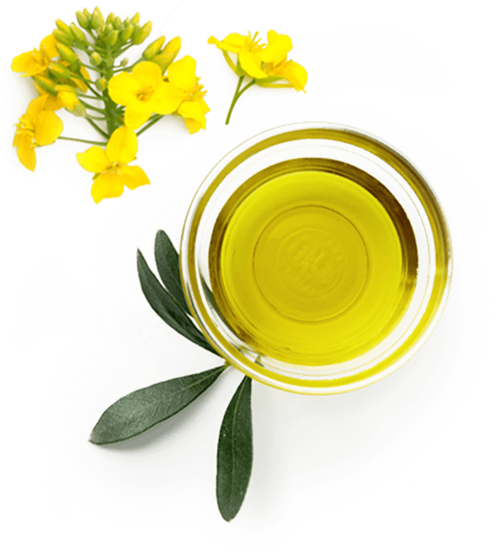 Olive Oil and yellow flower
