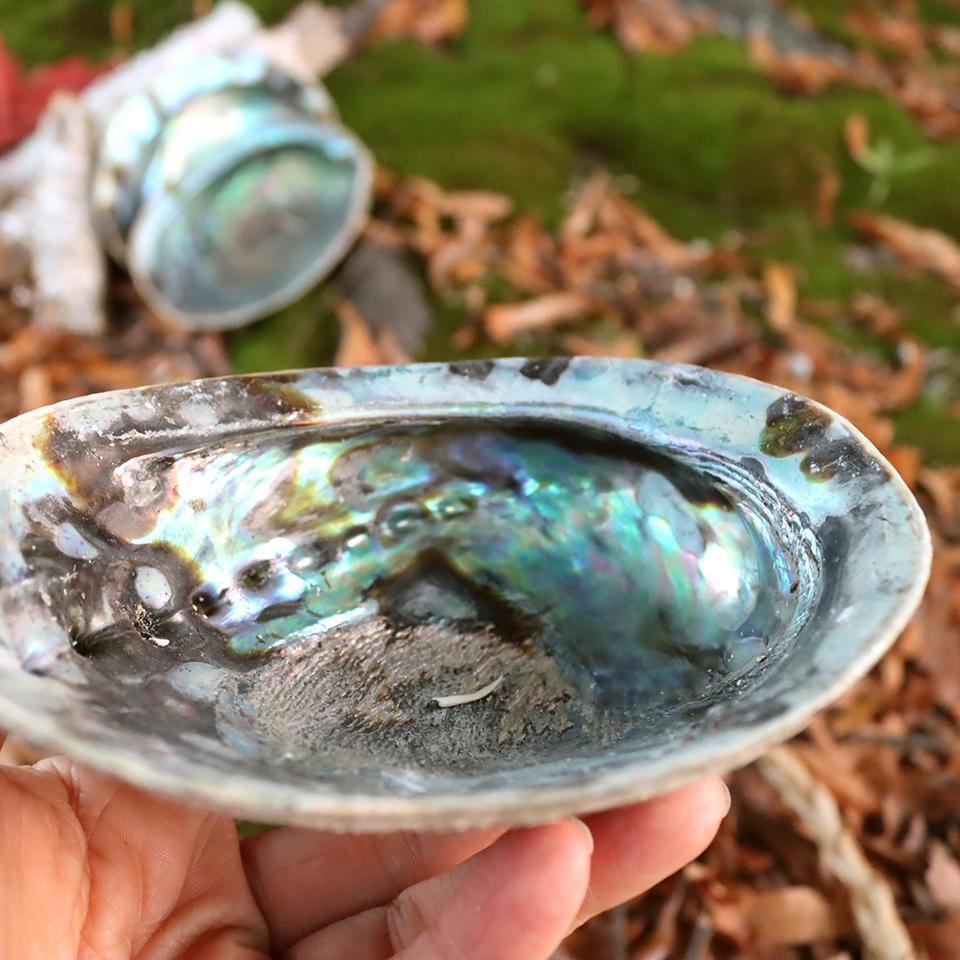 Abalone Shell - for smudging or for your nightstand to hold your jewelry - Alywillow