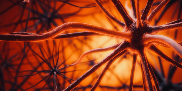 Graphic visualization of human brain nerve cells.