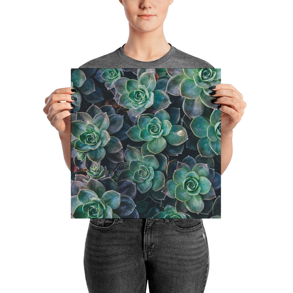 Succulents Poster