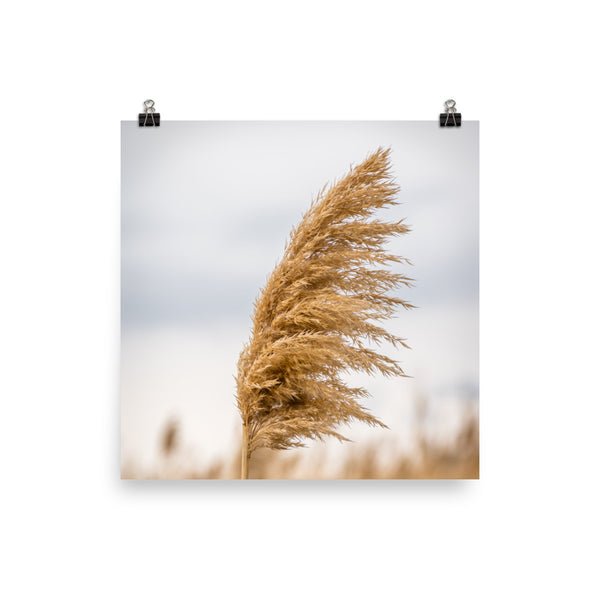 Pampas Grass Wall Art Print