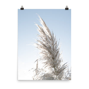 Light Pampas Grass Wall Art Print
