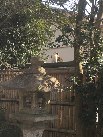 Cat at Munakata Shrine, Kyoto