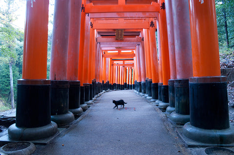 Cat at Fushimi Inari Shrine in Kyoto