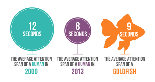 longer attention span goldfish