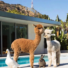Cute animals poolside