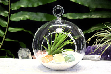 Creativity Crystals Tillandsia Terrarium Creativity Crystals Gift Set Air Plant Creativity Crystals Terrarium Office Gift Creativity