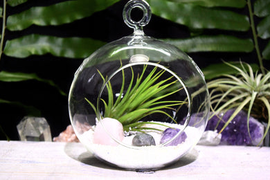 Stress Crystals Tillandsia Terrarium Stress Crystal Gift Set Air Plant Stress Crystals Terrarium Office Gift Stress Crystal Terrarium Stress