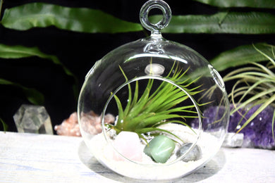 Anxiety Crystals Tillandsia Terrarium Anxiety Crystal Gift Set Air Plant Anxiety Crystals Terrarium Office Gift Anxiety Crystal Terrarium