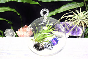 Protection Crystals Tillandsia Terrarium Protection Crystal Gift Set Air Plant Protection Crystals Terrarium Office Gift Protection Crystals