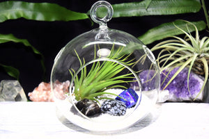 Dispel Negativity Crystals Tillandsia Terrarium Dispel Negativity Crystal Gift Set Air Plant Dispel Negativity Crystal Terrarium Office Gift