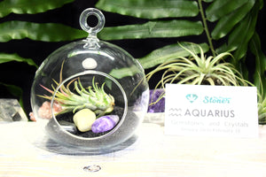 Aquarius Zodiac Crystals Tillandsia Terrarium Aquarius Crystals Gift Set Air Plant Aquarius Crystals Terrarium Aquarius Stones Gift Set