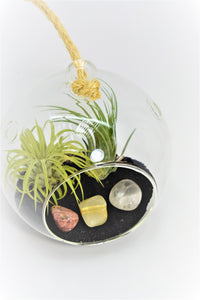 Virgo Zodiac Crystals Tillandsia Large Terrarium Virgo Crystals Gift Set Air Plant Virgo Crystals Terrarium Virgo Stones Gift Set Virgo  Set