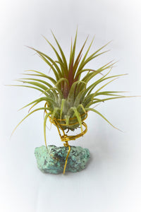 Raw Turquoise Tillandsia Plant Holder Beautiful Gemstone Plant Turquoise Air Plant Holder House Warming Gift Turquoise Air Plant Unique Gift