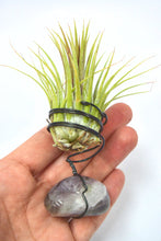 Fluorite Tillandsia Plant Holder Beautiful Gemstone Plant Fluorite Air Plant Holder House Warming Gift Fluorite Air Plant Unique Gift