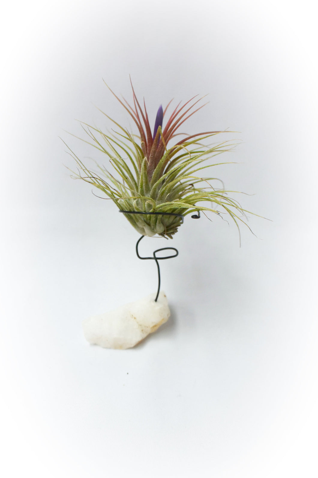 Raw Clear Quartz Tillandsia Plant Holder Beautiful Gemstone Plant Quartz Air Plant Holder House Warming Gift Quartz Air Plant Unique Gift