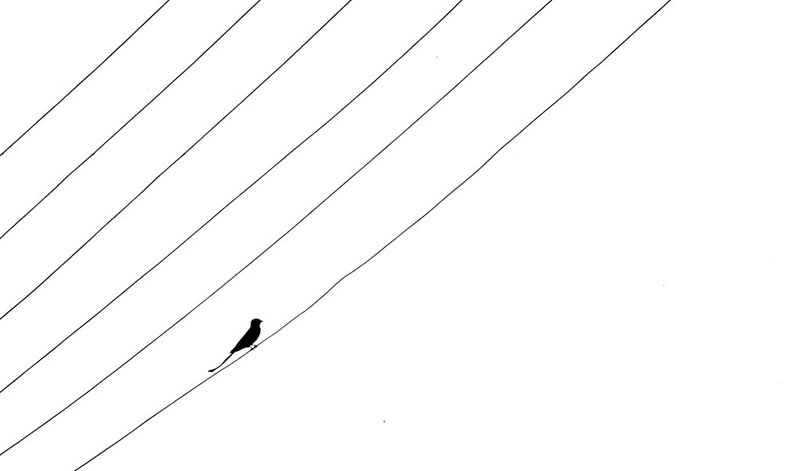 Lines and a Bird