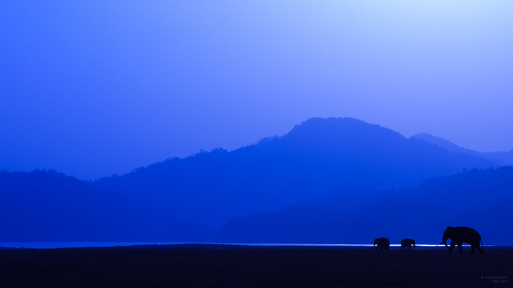 A Home in the Nature - Beautiful Elephant Silhouettes with Mountains - ArtBuRt