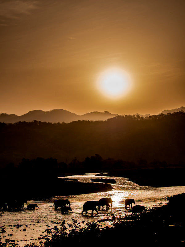 Elephants Sun and River