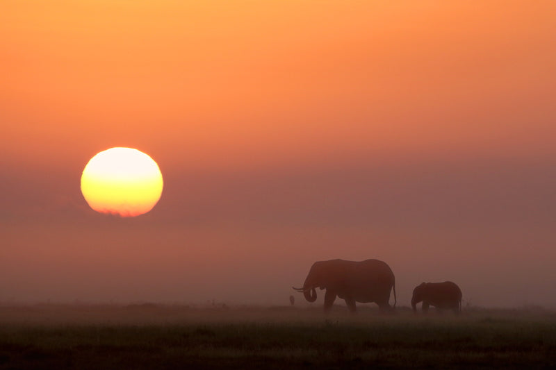 Elephants at Dusk 2 - ArtBuRt