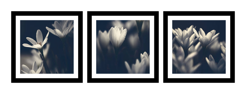 The Rain Lilly Series - Triptych - ArtBuRt