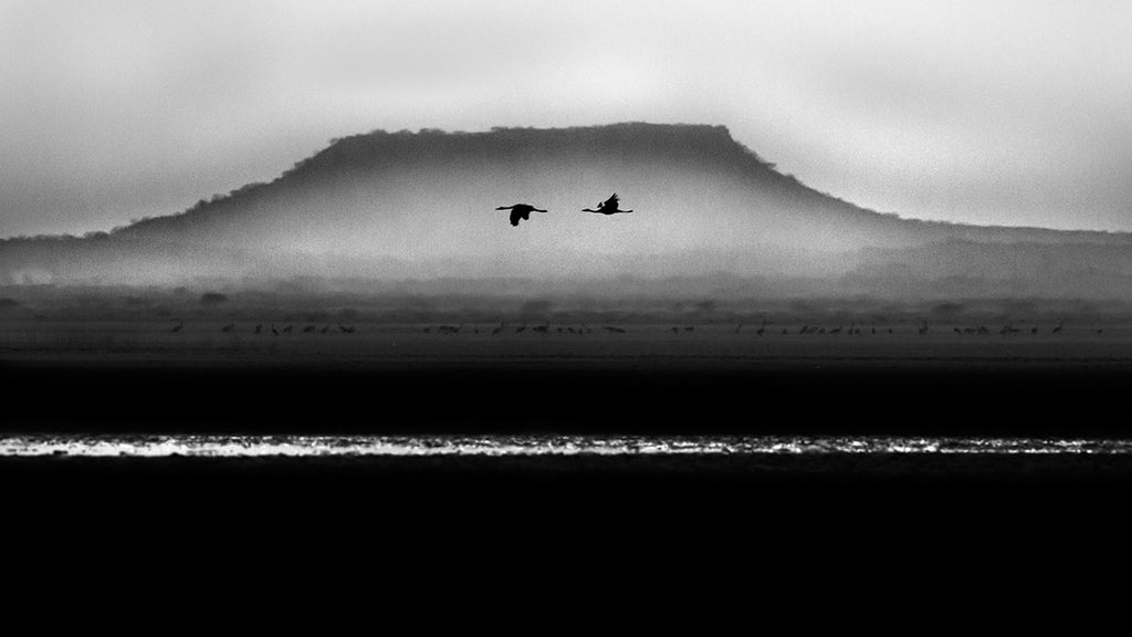Across - Birds flying across the mountain Black and white fineart image - ArtBuRt