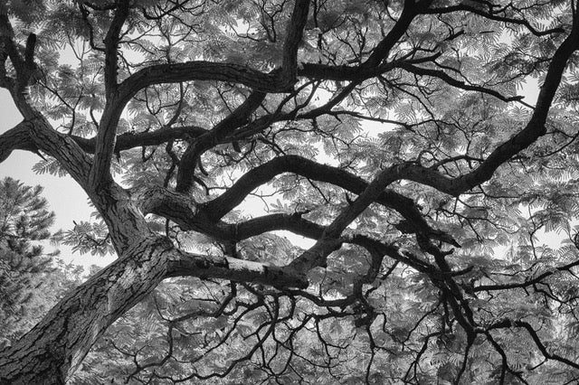 A Friend - Beautiful Image of a Tree in Black and White - ArtBuRt
