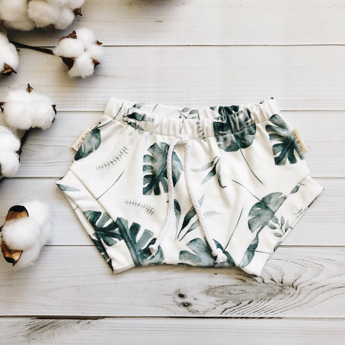 Monstera Shorties