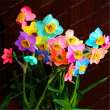 100 Pcs Narcissus Flower Daffodil plant Bonsai Plants Double Petals Absorption Radiation Potted DIY Home Garden Plant