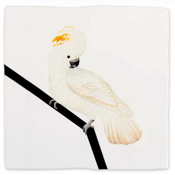 Fliese 'White Cockatoo'