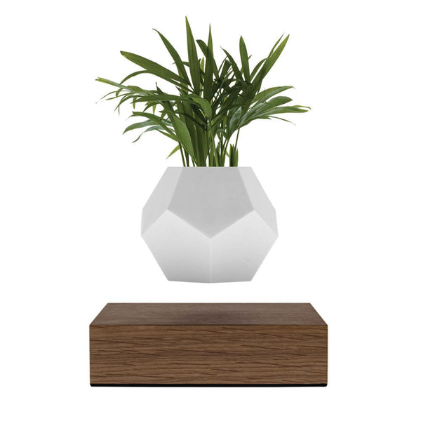 Lyfe Planter <br> Walnut Base