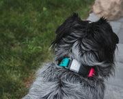 BioThane Fi Collar Band on Dog by Mutt Pack