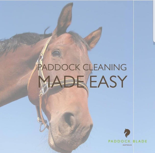 The Importance Of Horse Grooming