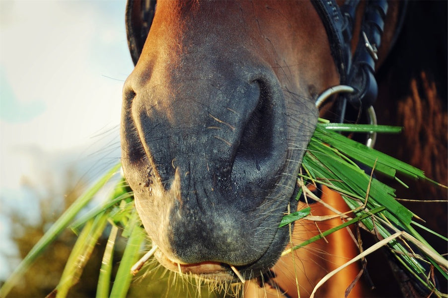 Dealing With Horse That Is A Picky Eater - Unravelling Fussy Equine Eating Habits