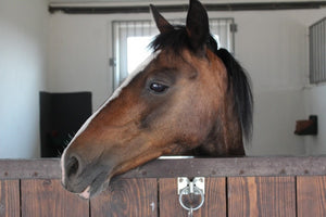What You Need To Know About Keeping Your Horse At Home